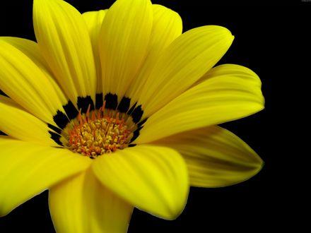 Обои Жёлтый цветок
