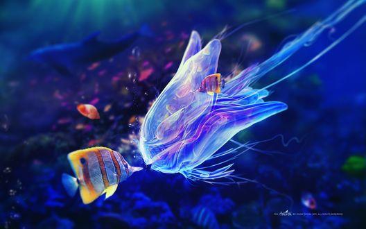 Обои Встреча дискусов с прожорливой медузой, в прозрачном теле которой видны скелеты рыб (by Adam Spizak 2011, all rights reserved)