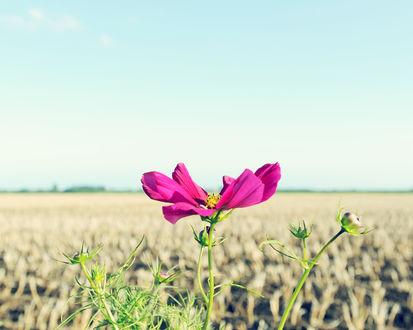 Обои Цветок в поле