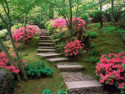 Обои Дорожка среди деревьев, цветов и папоротников