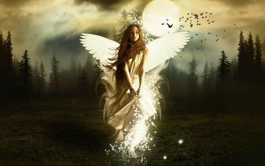 Обои Девушка-ангел по среди леса