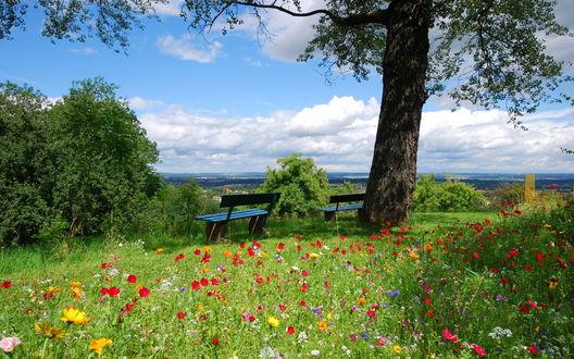 Обои Две скамьи в тени дерева с видом на красивый пейзаж