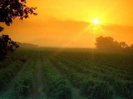 Обои Утро, восход солнца над туманными сонными полями