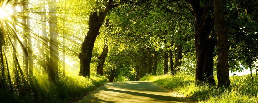 Обои Сказанный лес освещается ранним солнышком