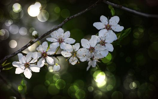 Обои Нежные цветочки