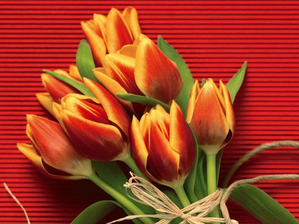 Тюльпаны картинка на открытку, безразличия