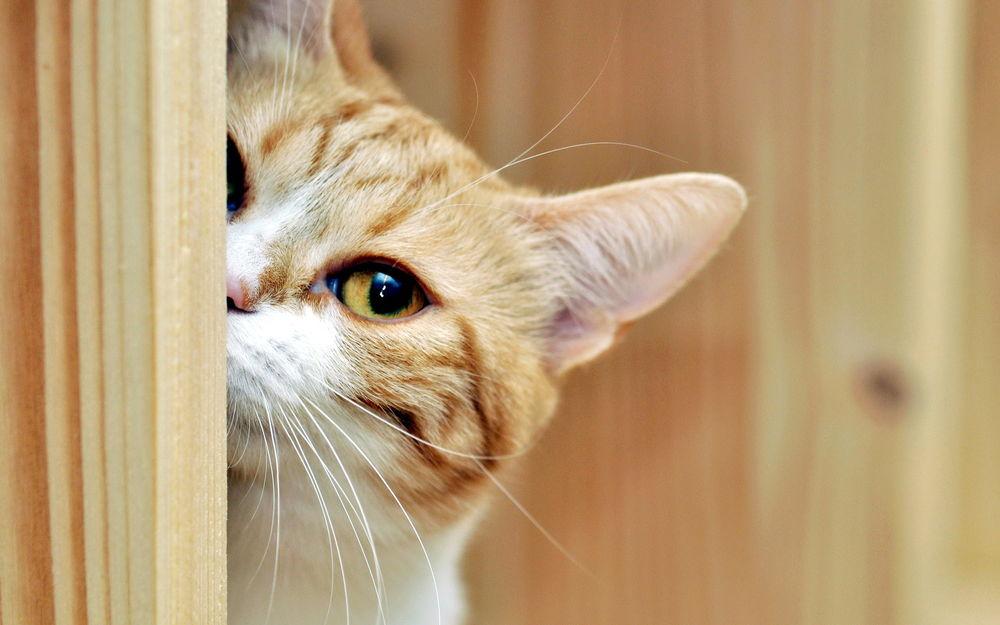 """Результат пошуку зображень за запитом """"кошка за углом"""""""