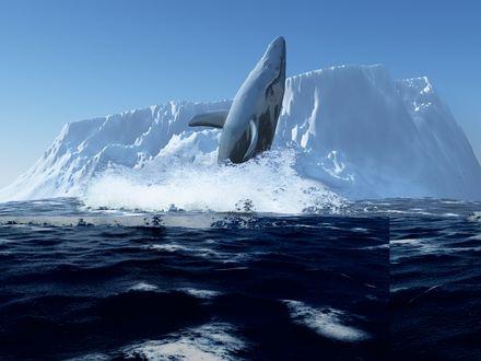 Обои Голубой кит выпрыгивает из воды