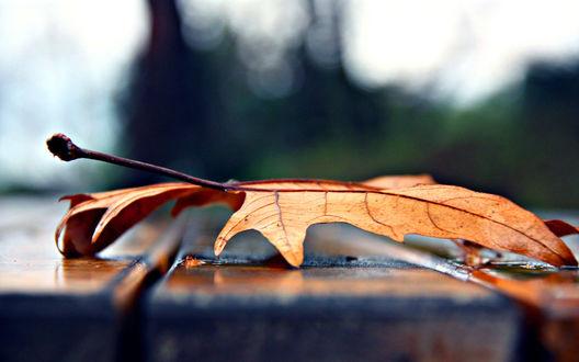 Обои Осенний кленовый лист на лавочке