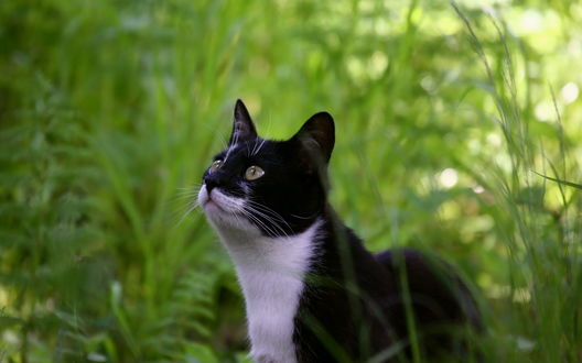 Обои Черно-белый кот в траве