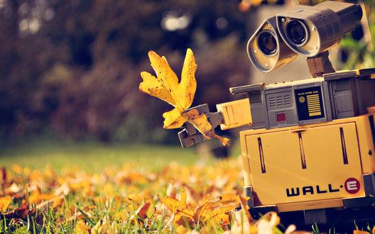 Обои Робот Wall-E / Валли с осеннем желтым листом