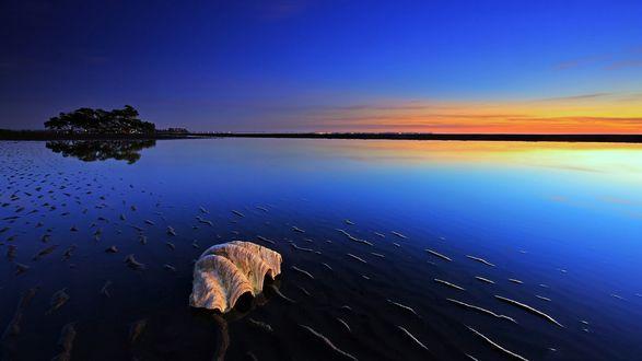 Обои Закат над гладкой поверхностью моря, на берегу лежит ракушка