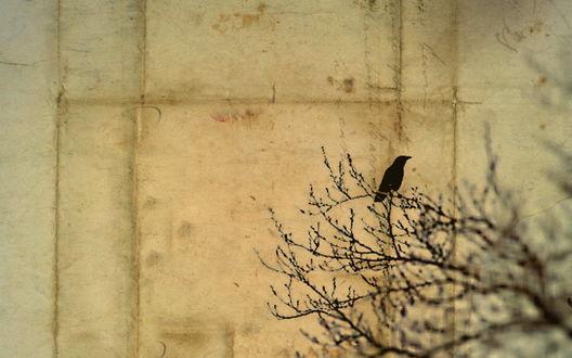 Обои Птица сидит на ветке на фоне бетонной стены
