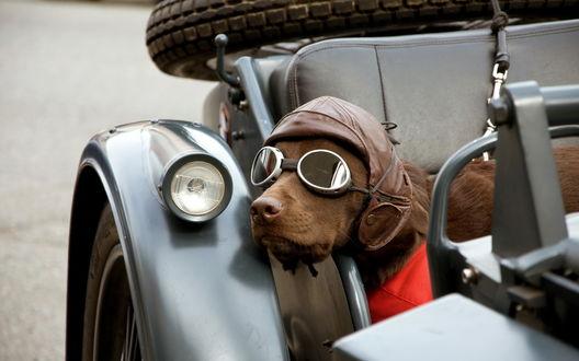 Обои Пес в очках сидит в коляске мотоцикла
