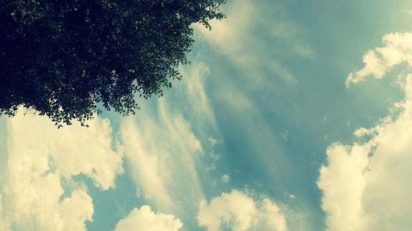 Обои Крона дерева на фоне голубого неба