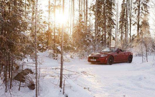 Обои Jaguar / Ягуар xkr-s в снежном лесу