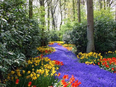 Обои Тропинка в лесу, устеленная цветами