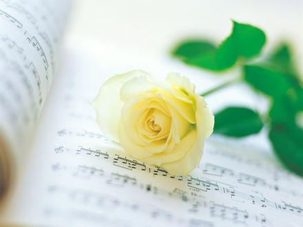 Обои Желтая роза на нотных листах