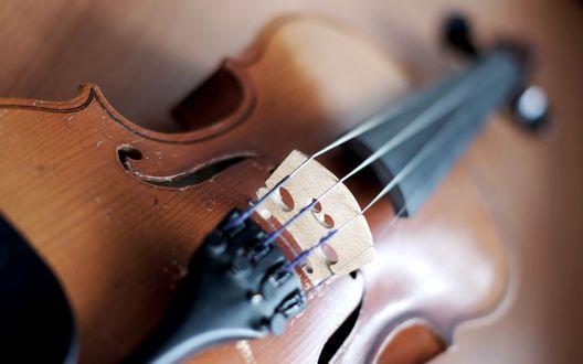 Обои Скрипка крупным планом