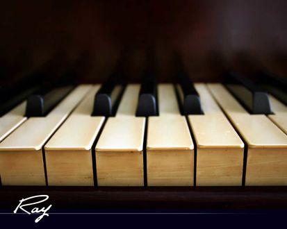 Обои Клавиши пианино (Ray)