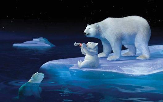 Обои Белые медведи сидят на льдине и пьют напитки (Coca-Cola / Кока-кола)