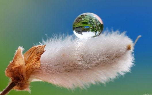 Обои Удивительное творение природы, пушистое растение с каплей воды