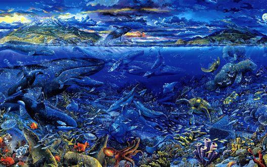 Обои Жизнь кипит в морских глубинах, там спокойно плавают киты, осьминоги, дельфины, рыбы, черепахи, касатки
