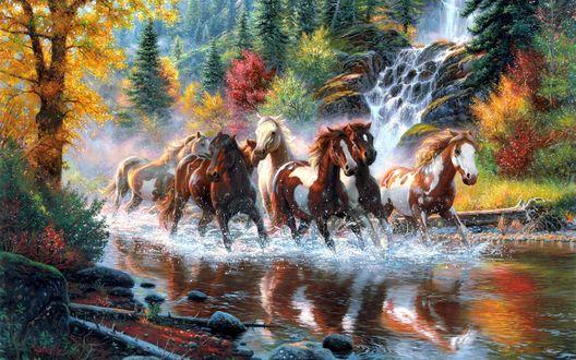 Обои Табун лошадей бежит по мелководной лесной реке, сзади них маленький лесной водопад
