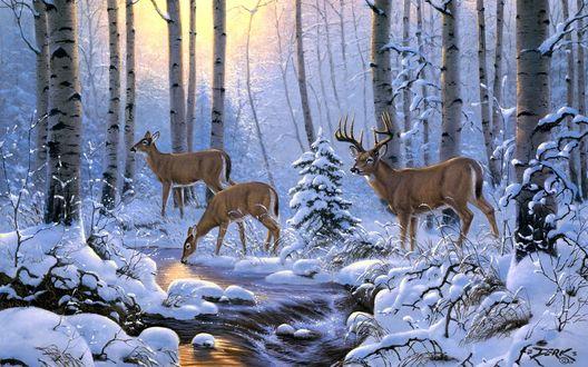 Обои Три оленя в зимнем лесу пьют воду у ручья