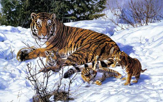 Обои Тигрица и три маленьких тигренка на снегу