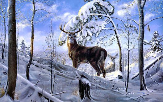 Обои Могущественный олень в зимнем лесу
