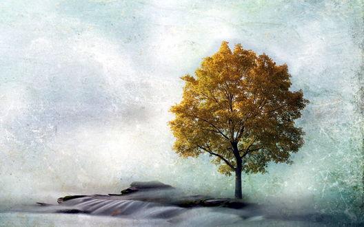 Обои Одинокое осеннее дерево
