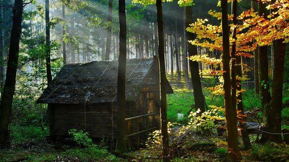 Обои Старый дом стоит по среди леса