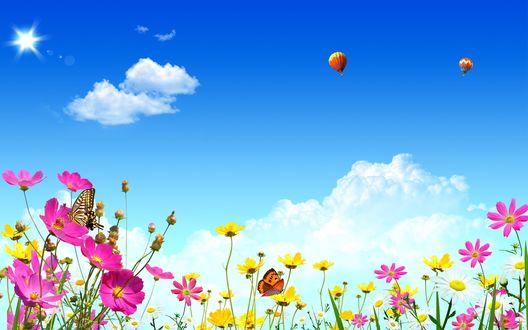 Обои Цветочное поле и воздушные шары в небе
