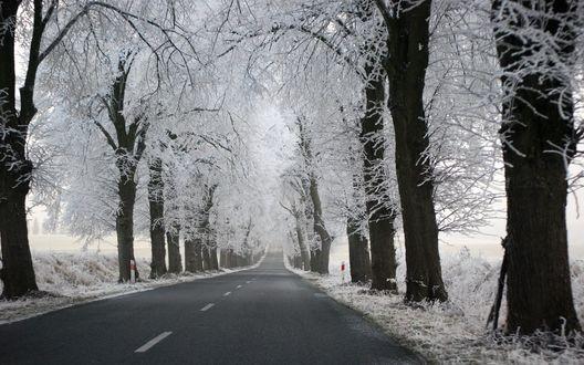 Обои Вдоль дороги стоят заснеженные деревья