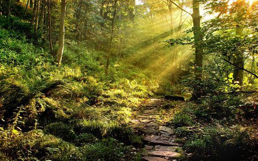 Обои Солнечные лучи пробиваются сквозь густую листву деревьев