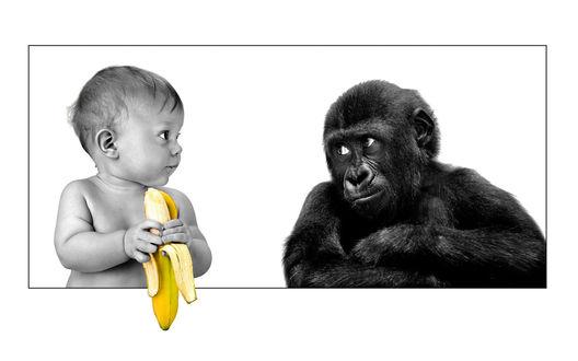 Обои Малыш ест банан, обезьяна смотрит на это неодобряюще