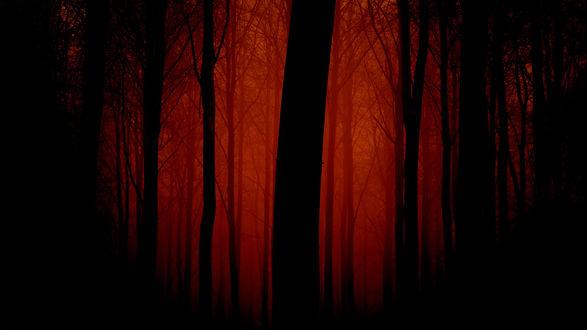 Обои И без того темный лес, в мрачную облачную погоду