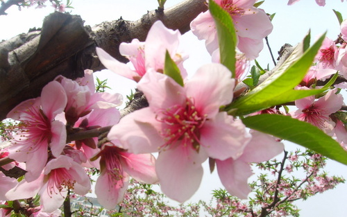 огромные картинки цветы: