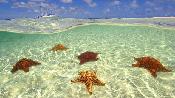 Обои Морские звезды на прозрачном дне океана