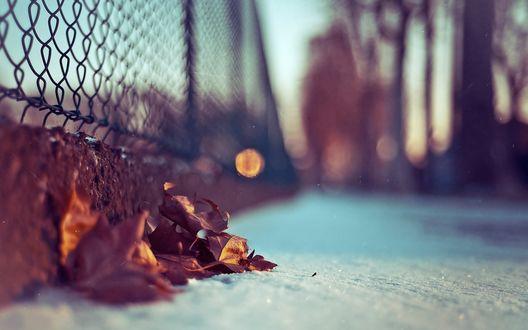 Обои Везде уже лежит снег, только под сеткой осталось несколько осенних листочков