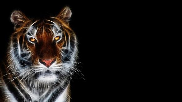 Обои Тигр (красивая стилизованная картинка