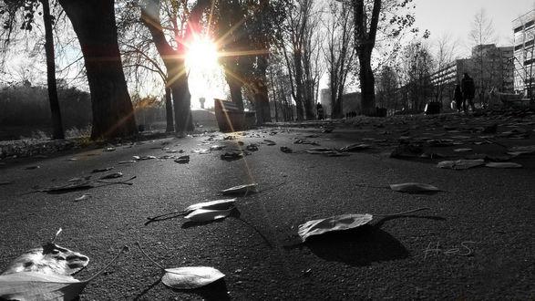 Обои Солнце освещает черно-белую улицу с опавшими листьями на асфальте
