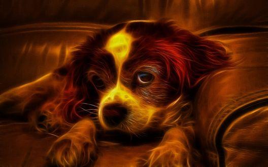 Обои Огненный портрет щенка, который лежит на диване