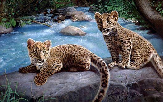 Обои Два маленьких леопарда у быстрой речки (работа художника Charles Frace)
