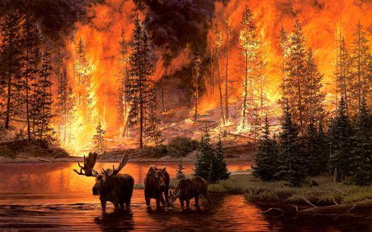 Обои Лоси спасают свою жизнь от лесного пожара