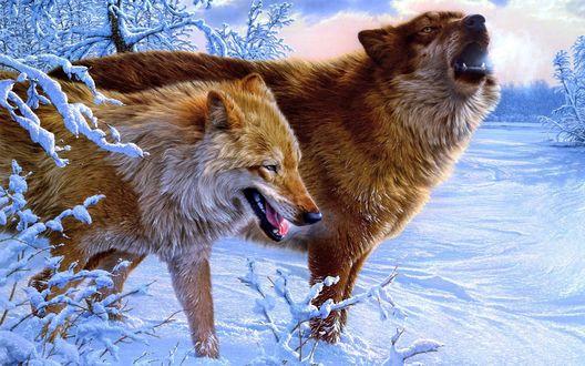 Обои Волки идут по снегу
