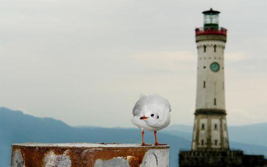 Обои Белая чайка на фоне старого маяка