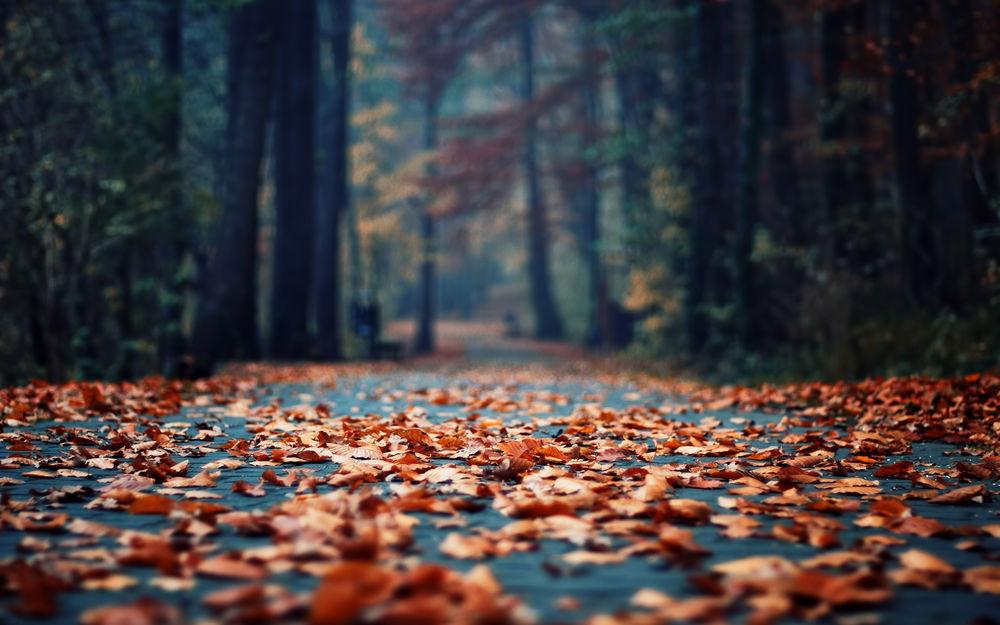 Обои для рабочего стола Парковая дорога ,усыпанная осенними листьями