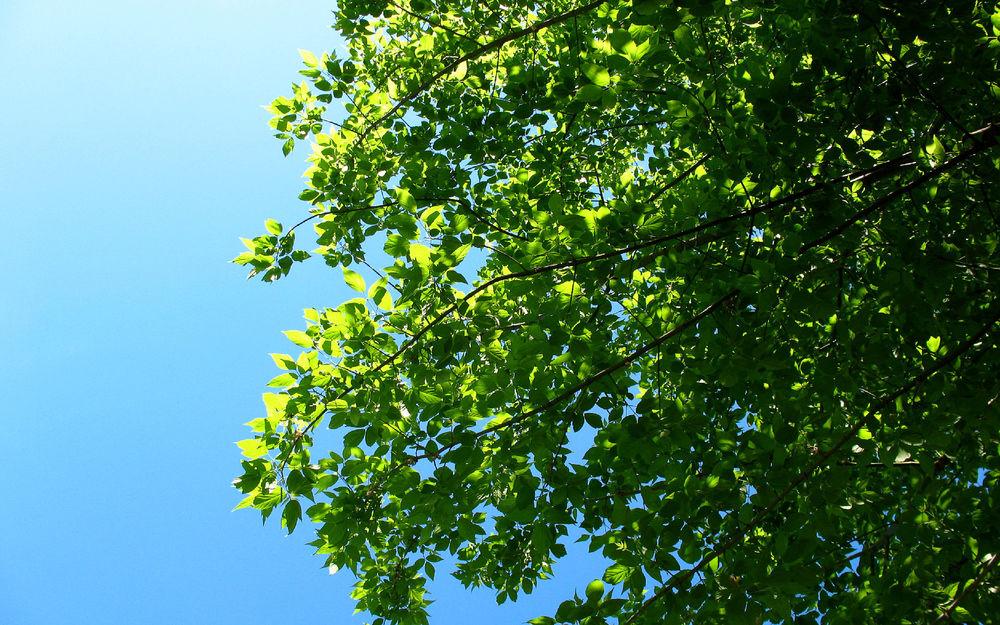 Добрым, картинки крона дерева